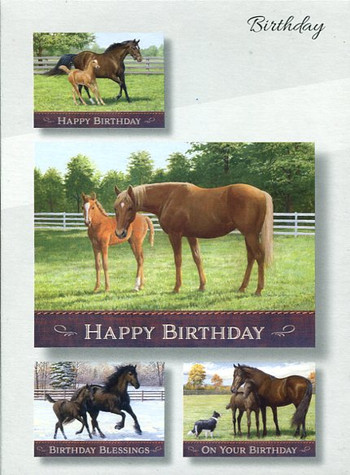 Happy birthday greeting cards with horses and colts
