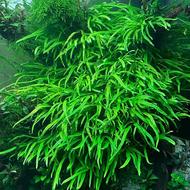 Selecting the Right Aquarium Plant Fertilizer – PART I