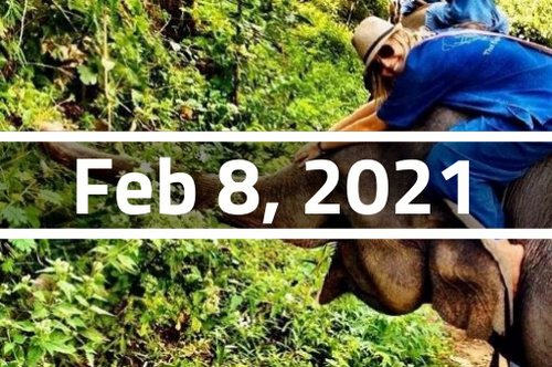 Thailand, Chiang Mai - TEFL Course Deposit - February 8 - March 5, 2021