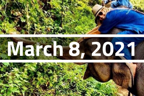 Thailand, Chiang Mai - TEFL Course Deposit - March 8 - April 3, 2021