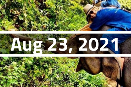 Thailand, Chiang Mai - TEFL Course Deposit - August 23 - September 17, 2021