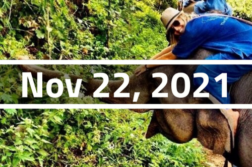 Thailand, Chiang Mai - TEFL Course Deposit - November 22 - December 17, 2021