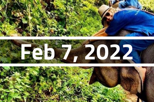 Thailand, Chiang Mai - TEFL Course Deposit - February 7 - March 4, 2022