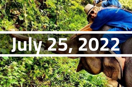 Thailand, Chiang Mai - TEFL Course Deposit - July 25 - August 19, 2022