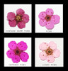 Pink Colour Comparisons for Nail Art Dried Flowers