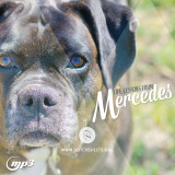 Life Lessons from Mercedes (MP3 Download)
