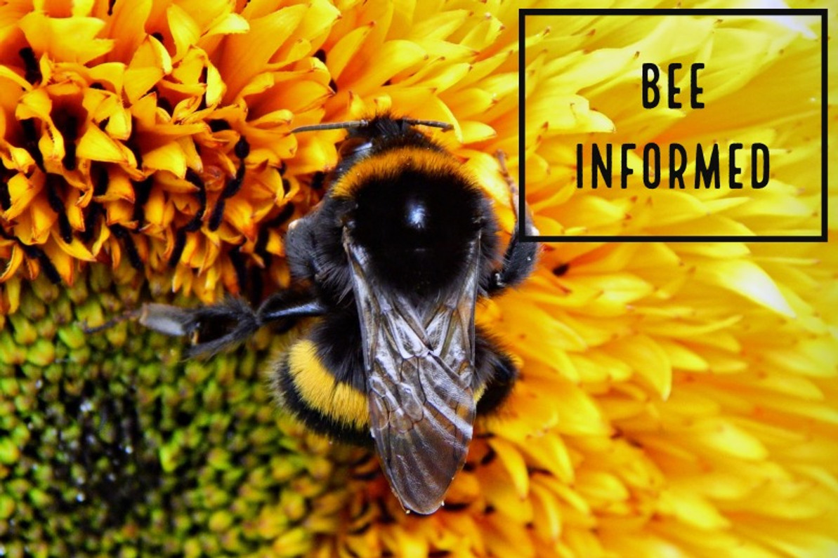 """Bee Informed: """"Perfect Lawns"""", Endangered Bees, and Tracking Bee Health with eBird Data"""