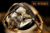 Bee Informed: Bee Toxic Pesticides, Bee Competition, Seed Mix Composition