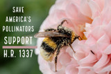 Bee Informed: Saving America's Pollinators Act, Immunity to Pesticides, and Influx of Honey Bees