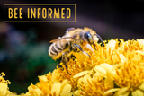 Bee Informed: Protect Bees from Disease, Master Melittologist Program, Bee Identification