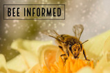 Bee Informed: Flexible Pollination, Eusociality of Bumble Bees, Mushroom Hives
