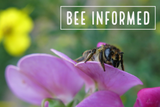 Bee Informed: Helping Trees (and Bees), Neonics Harm Bees, New Bee Lawn Resource