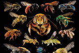 5 Major Causes of Global Insect Declines & How to be Part of the Solution