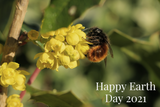 Happy Earth Day from Crown Bees!