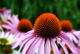How To - A Guide to Native Plant Gardening