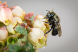 Climate Change: It's Bad for Bees