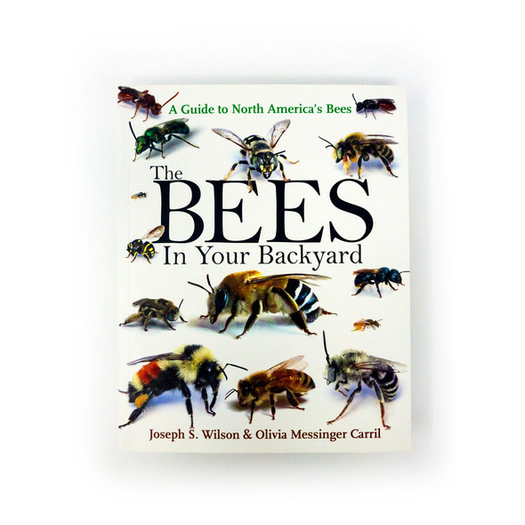 Bees in backyard front cover