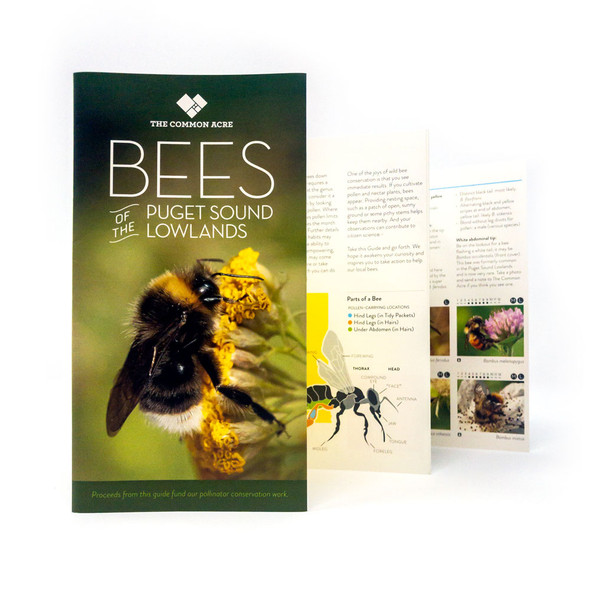 Puget Sound lowlands field guide to bees out