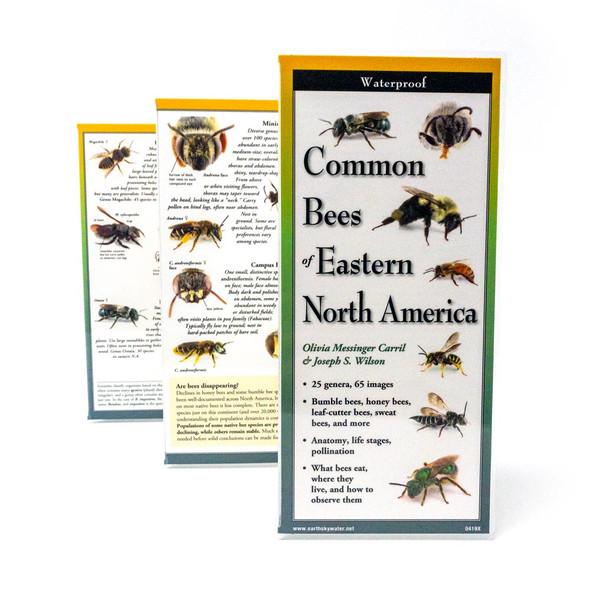 Eastern Bee Field ID card left