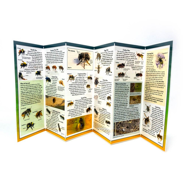 Western Bee Guide expanded