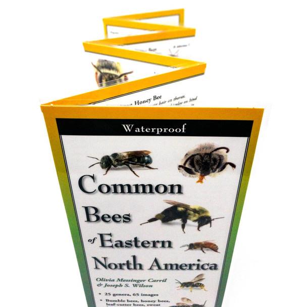 Eastern Bee Field ID card