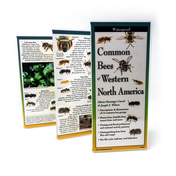 Western Bee Guide