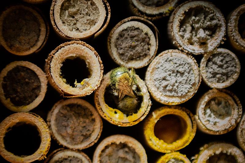 mason-pollen.jpg
