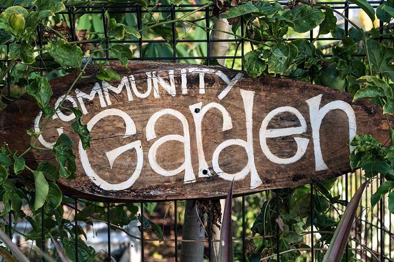 Community Garden, Image by David Clode, Unsplash