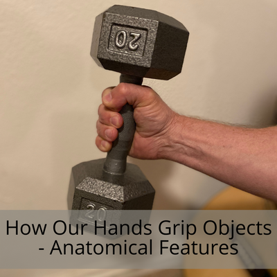 Some Unique Anatomical Features of our Hand that Enhance our Ability to Grip and Hold Objects