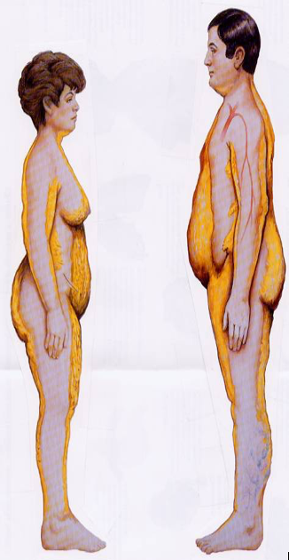 body-fat-prohealthcareproducts.com.png