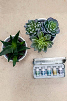 Scentered aromatherapy with plants