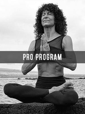 pro-program-collection.jpg