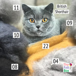 Needle felting wool in british shorthair cat shades