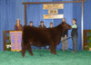 Maternal Sib Reserve Chi NAILE 2014 shown by Sara Sullivan