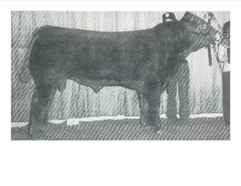 Hipps Polled Elevation