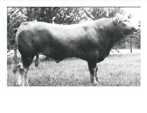 Hipps Polled Elevation JR.