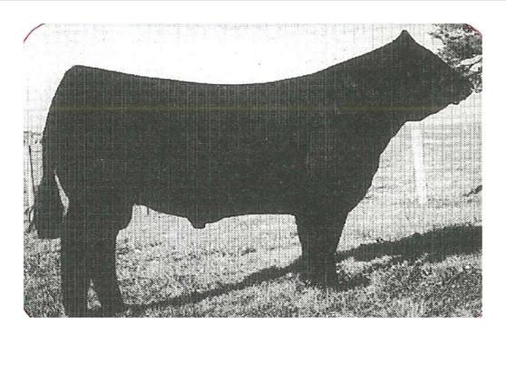 SLVL Beef 341E