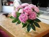Pink Sherbet