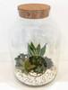 Glass Jar Terrarium - Same Day Delivery