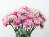 Carnation Box