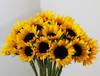 Sunflowers Box