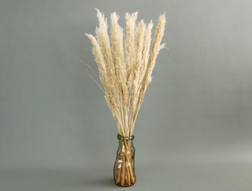 Barley Twirl