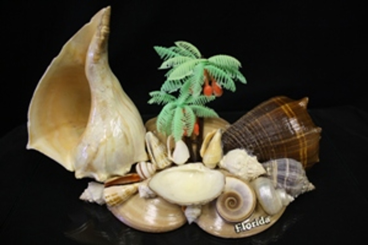 Assorted Whelk Arranged with Palm Tree