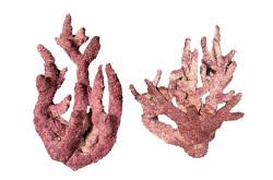 Real Reef Fancy Branch ROCK * FANCY BRANCH * 33 lb