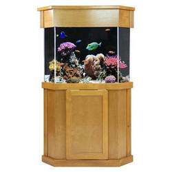 Clear-for-Life 125-Gallon Pentagon Acrylic Aquarium Setup