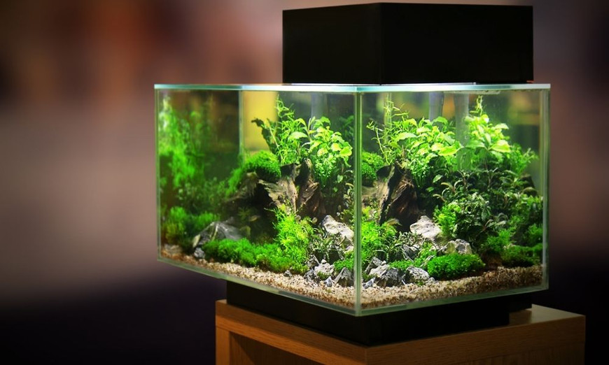 Differences Between Acrylic and Glass Aquariums