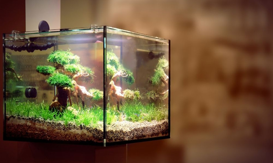Are Rimless Tanks Better? Pros and Cons of Rimless Aquariums