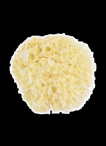 Natural Sea Sponge Honeycomb Sponge