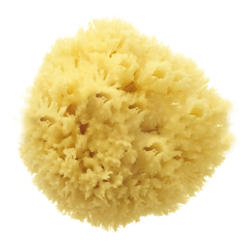 Natural Bath Sponge Wool Sea Sponge