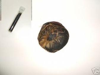 MUSK: Tibet Wild deer musk - black grains 0.375 GRAMS.